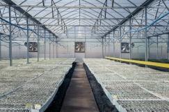 Sutherland Seedlings Clones