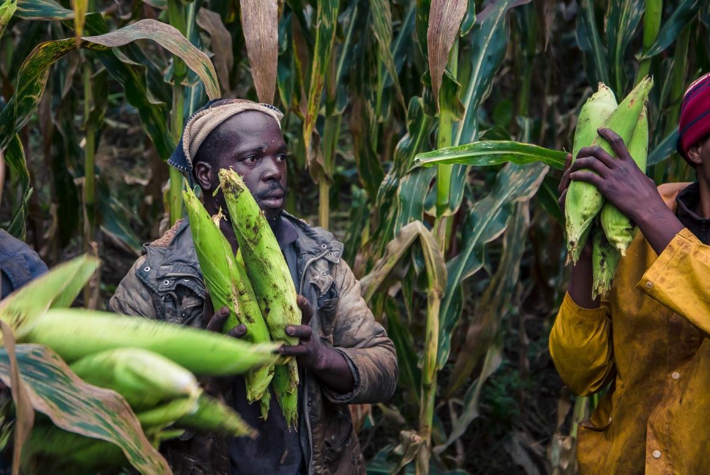 Farm worker (2)