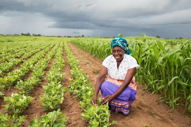 CHC Smallholder farmer in Zambia