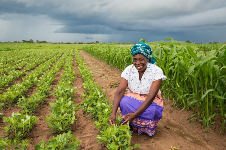 AgDevCo partnering with CHC Commodities in Zambia and offering support and training to smallholder farmers