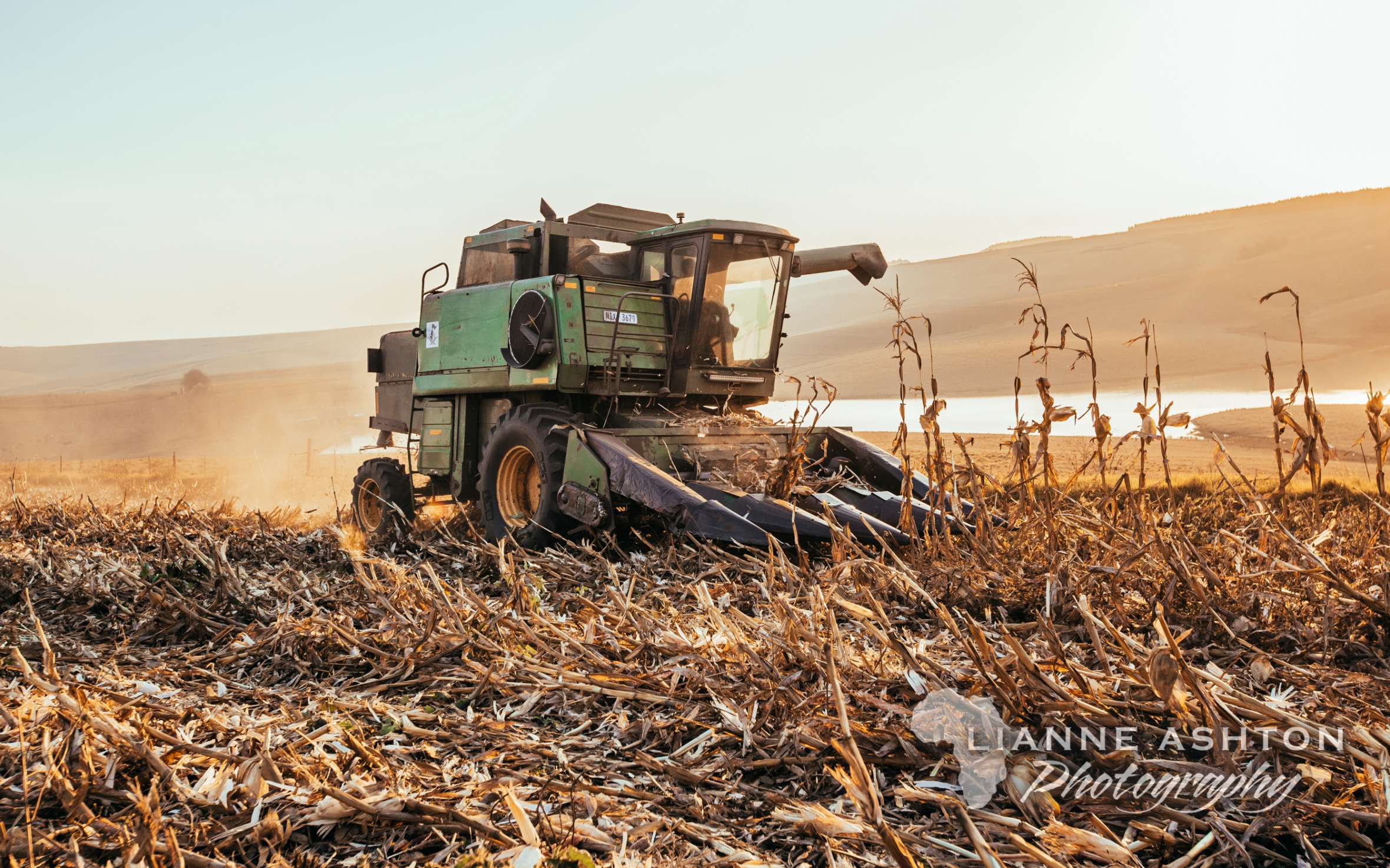 Maize harvest by Ashleigh Farm Contracting and Field Services