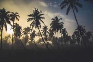 Mozambique palm forest