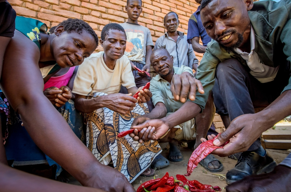 Paprika Training with smallholder farmers