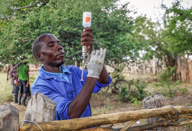 Vaccinating Smallholder farmer's Cattle