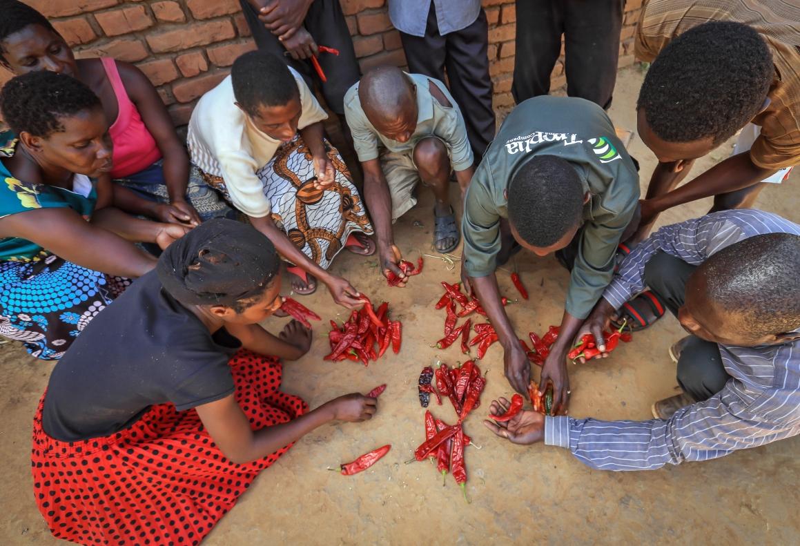 Smallholder farmers receiving training