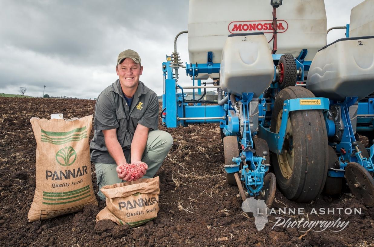 Planting Pannar seed (1)