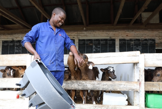 Dairy farming in South Africa (6)