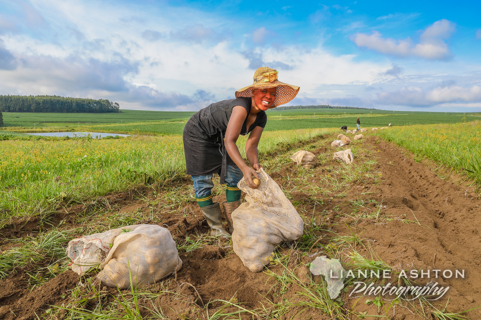 Pulling potatoes (1)