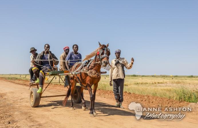 Horse carts are popular methods of transport in Senegal