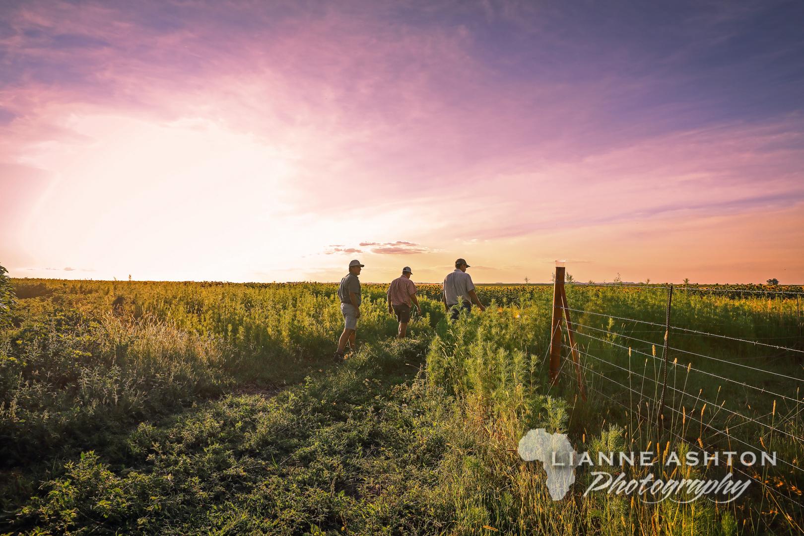 Parys farm landscape (4)-3
