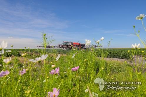 Soybean crop in Parys (1)