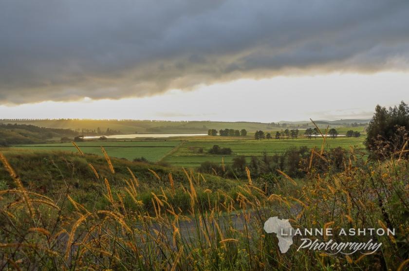 Ixopo landscape (2)