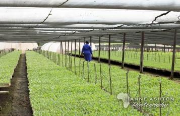 Sutherland Seedlings (31)