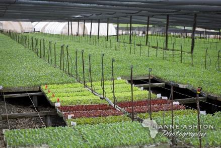 Sutherland Seedlings (41)