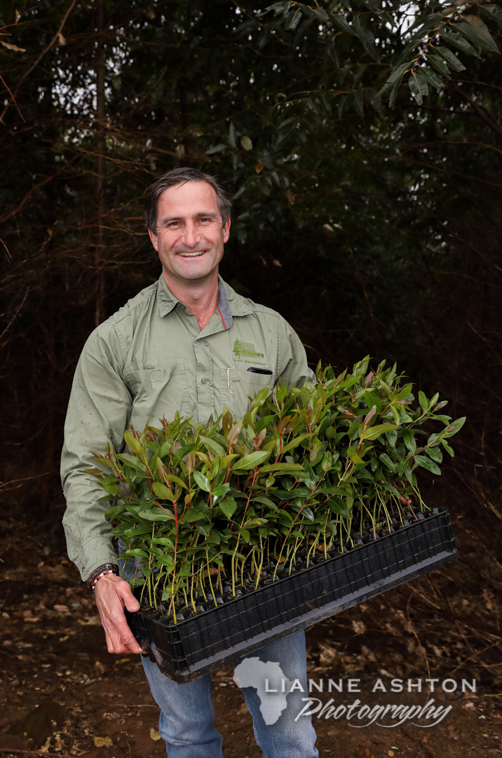 Ellepot Eucalyptus root stock (1)