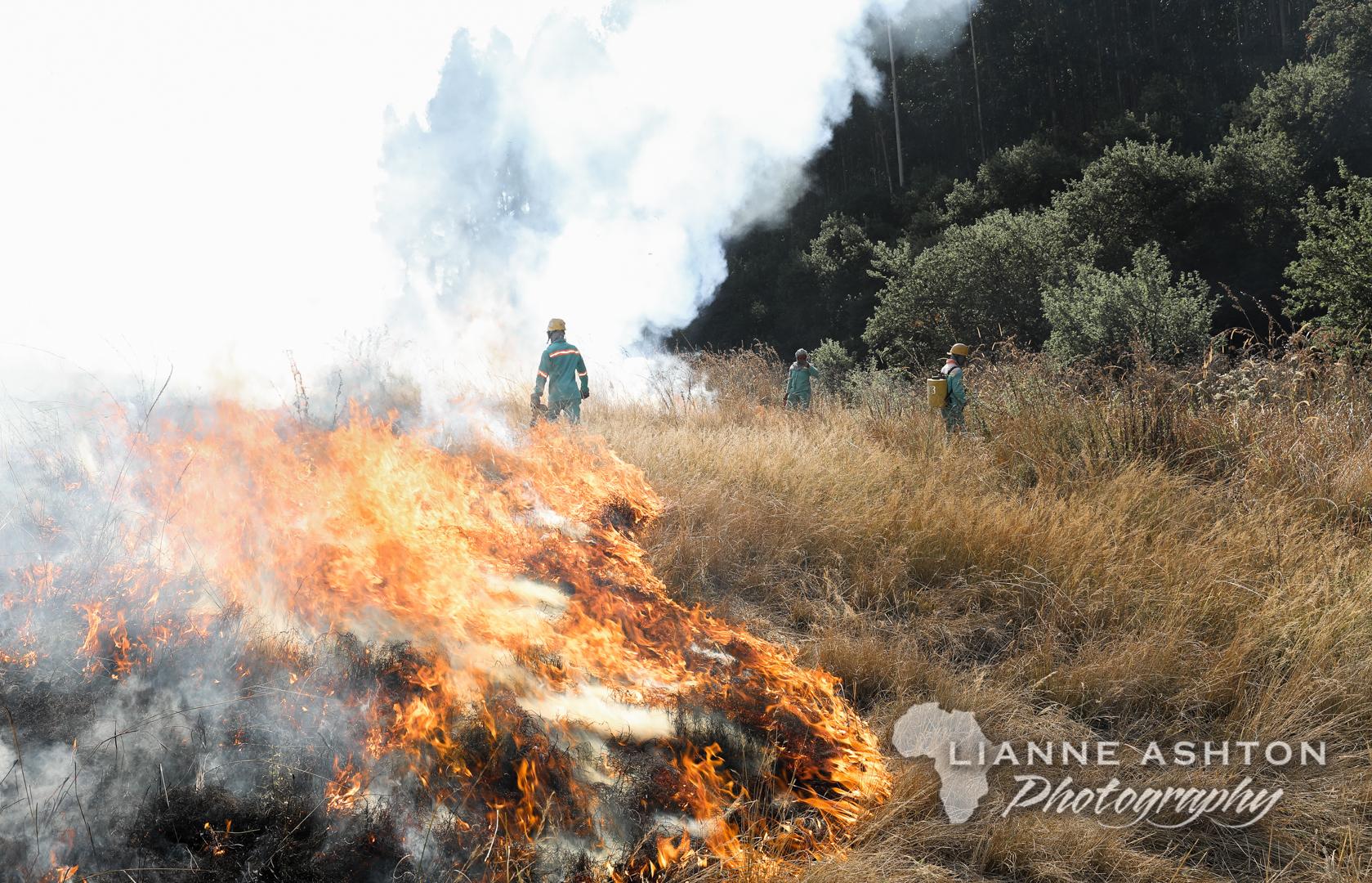 Firebreaks (12)