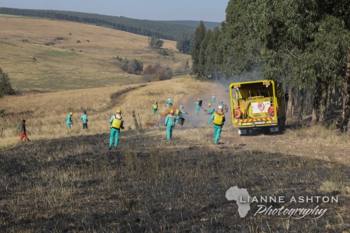 Forestry operations (1)