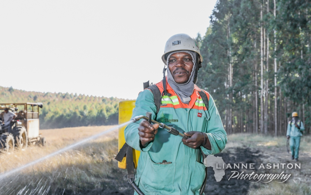 Forestry operations (12)