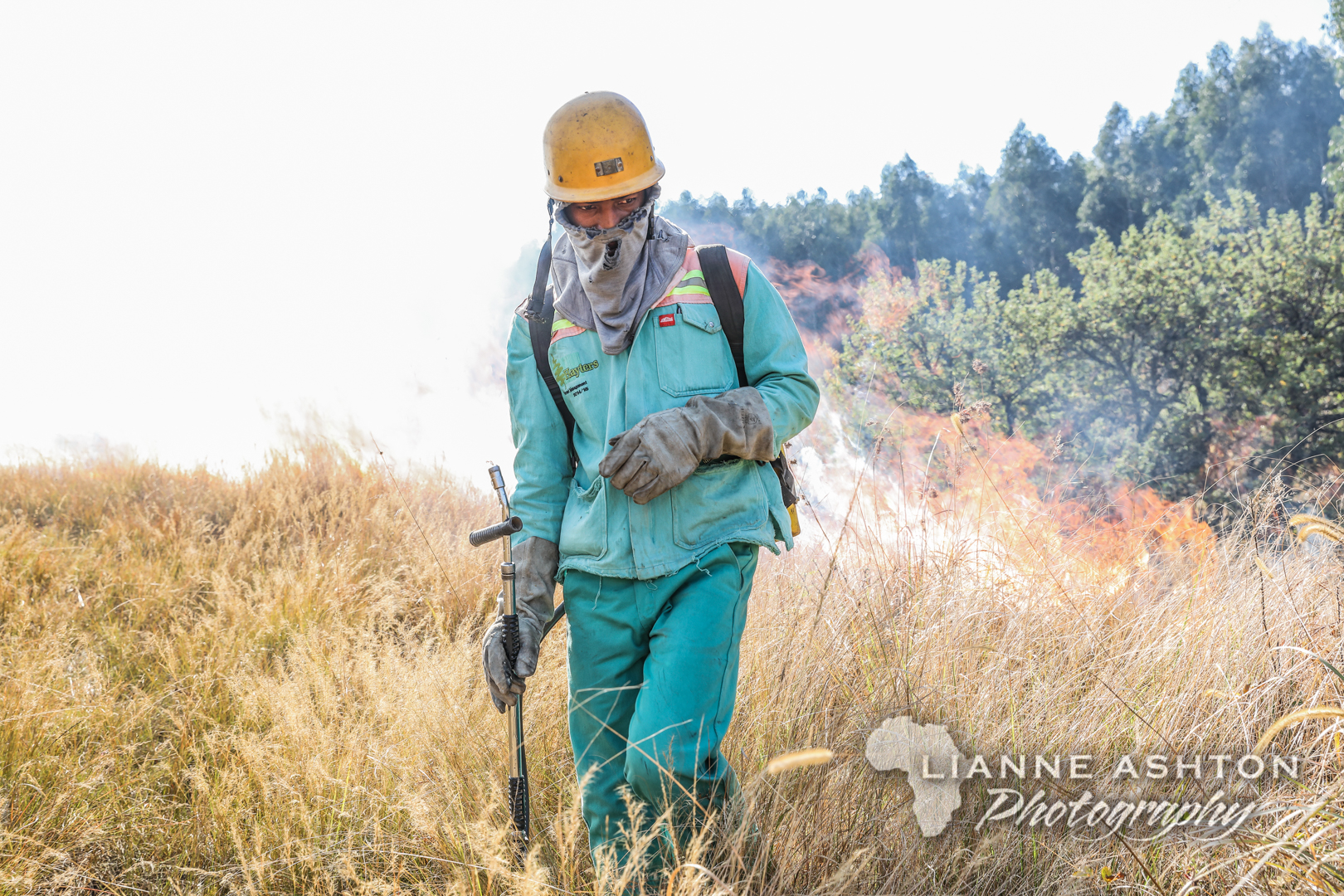 Forestry operations (19)