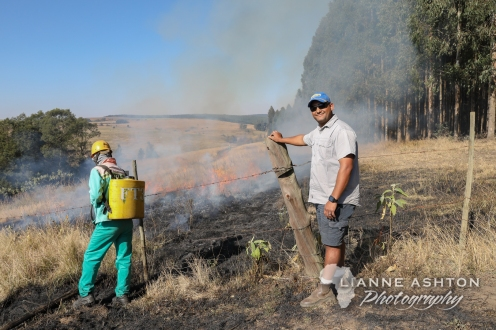 Forestry operations (2)
