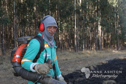 Forestry operations (9)