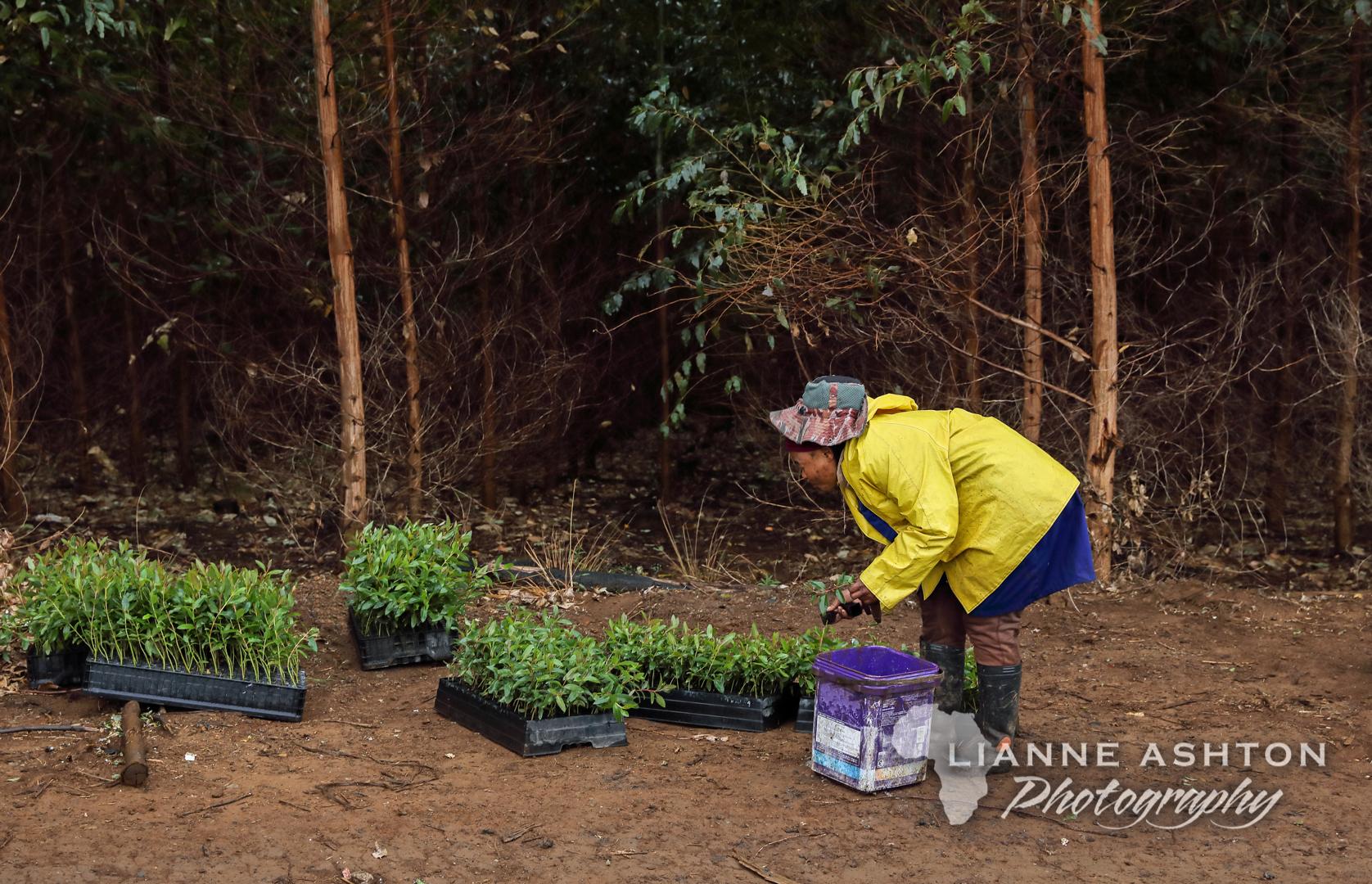 Planting Ellepots