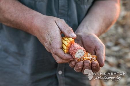 Farmers hands