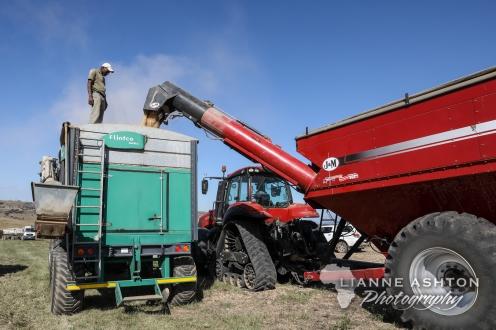 Combine Harvester (1)