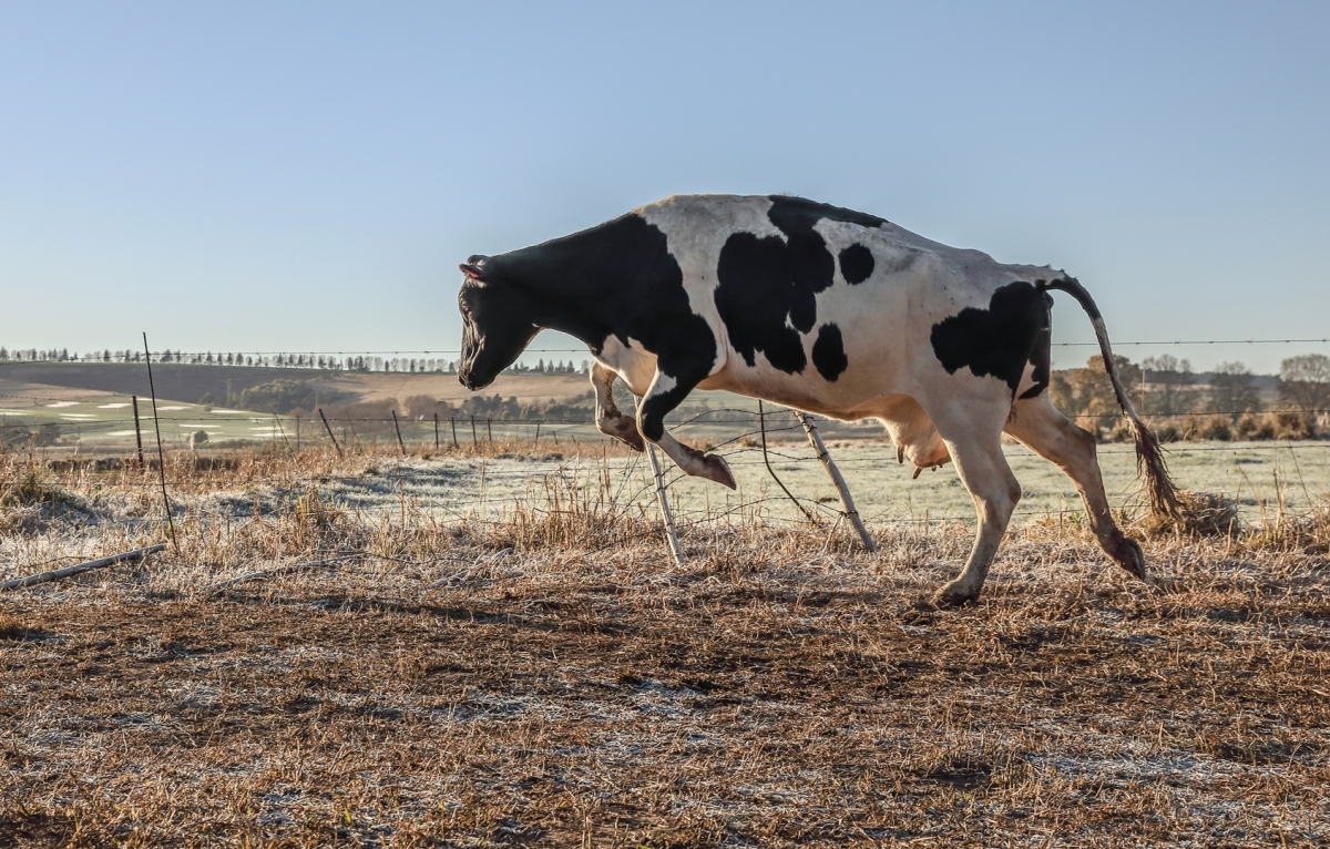 Gallery: Dairy Day day at Loch Buighe andCraigieburn
